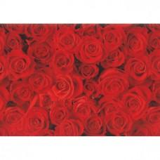 B10-357 Dovanų pakavimo popierius ROTE ROSEN 11085404 SUSY CARD